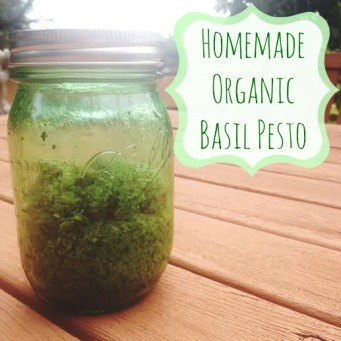 homemade organic basil pesto fabulously disheveled1.jpg