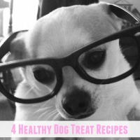 4 DIY Healthy Dog Treats