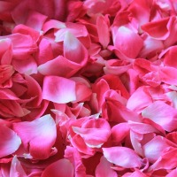 Beauty DIY: Make Your Own Rose Water