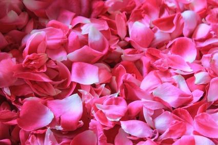 rose-petals-1155147_960_720
